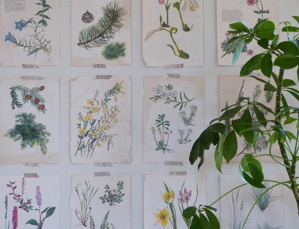 déco mur botanique