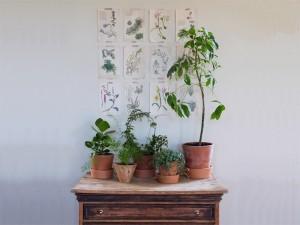 mur botanique