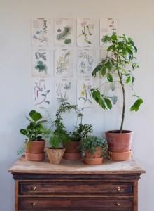 mur botanique diy