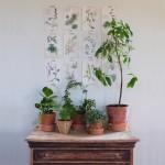 Au jardin botanique {le mur végétal des paresseuses}